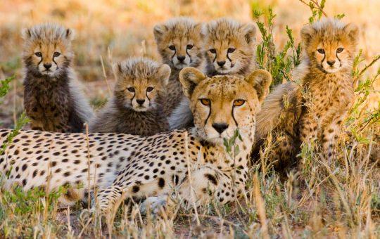Safari-Big-five-Easy-Africa