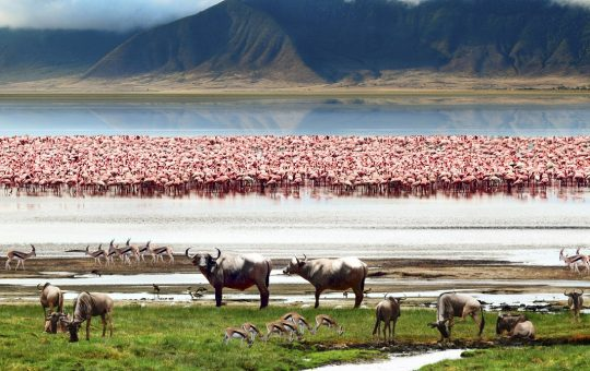 safari-simba-deluxe-Easy-Africa